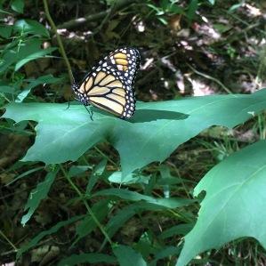 Abundance and a  Butterfly