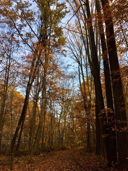 Fall Walk Tradition