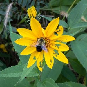 Flower Endures Bee