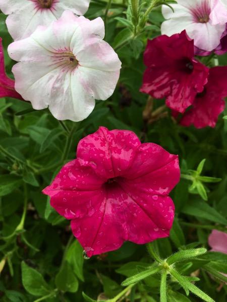 Flowers Dew