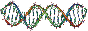 Double Helix DNA structure