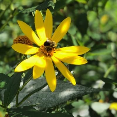 Making light - bees at play