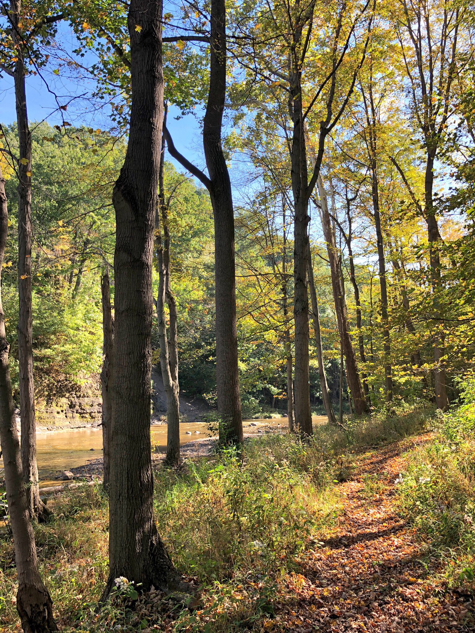 Luminous Forest Path