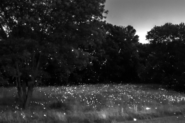 fireflies evoke joy and wonder