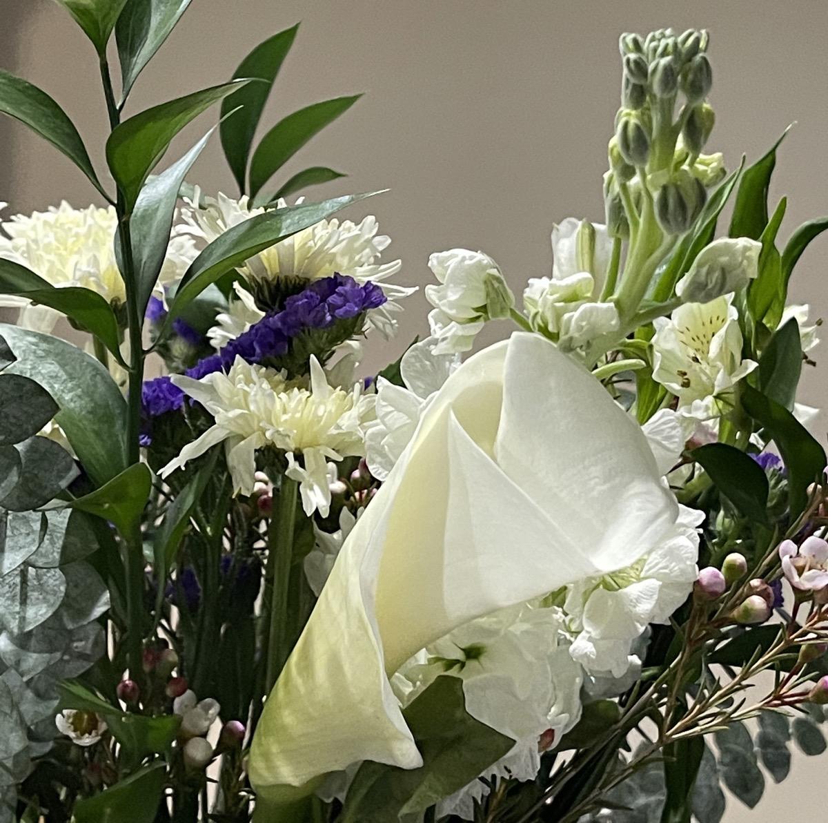 IMG 0954 dreams flowers2