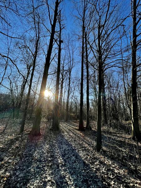 Sunrise in Spring